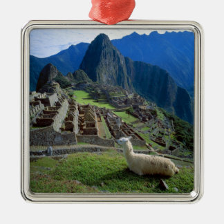 South America, Peru. A llama rests on a hill Metal Ornament