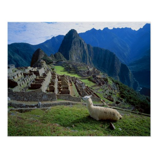 South America, Peru. A llama rests on a hill Poster