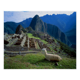 South America, Peru. A llama rests on a hill Poster