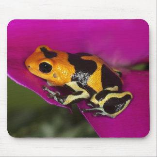 South America, Peru. Close-up of Intermedius Mouse Pad
