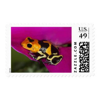 South America, Peru. Close-up of Intermedius Postage