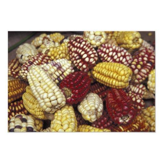 South America, Peru Corn, Maize Photo Print