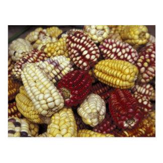 South America, Peru Corn, Maize Postcard