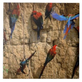 South America, Peru, Manu National Park, Tile