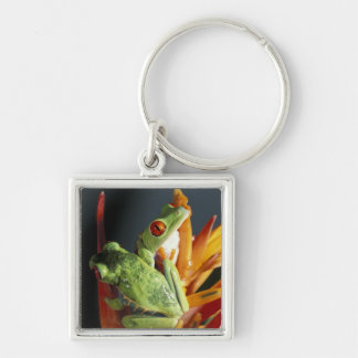 South America. Red-eyed tree frog Agalycmis Keychain