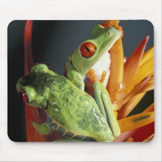 South America. Red-eyed tree frog Agalycmis Mouse Pad