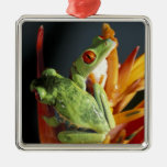 South America. Red-eyed tree frog Agalycmis Christmas Tree Ornaments
