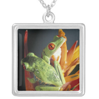 South America. Red-eyed tree frog Agalycmis Silver Plated Necklace