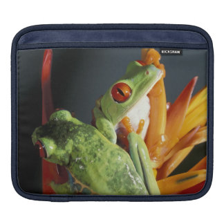 South America. Red-eyed tree frog Agalycmis Sleeve For iPads