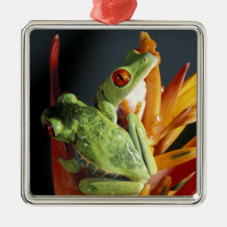 South America. Red-eyed tree frog Agalycmis Square Metal Christmas Ornament