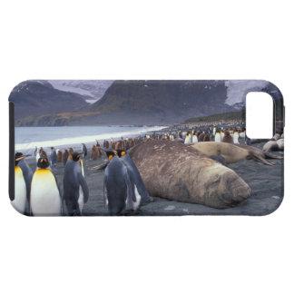 South America, South Georgia Island, Elephant iPhone 5 Cases