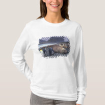 South America, South Georgia Island, Elephant T-Shirt