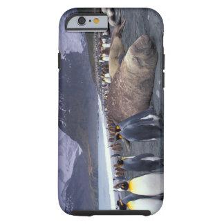 South America, South Georgia Island, Elephant Tough iPhone 6 Case