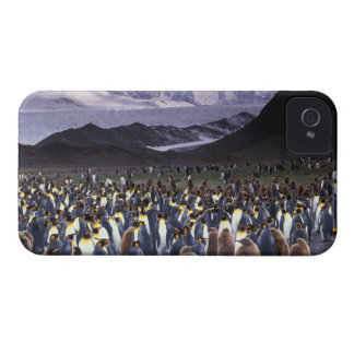 South America, South Georgia Island, King iPhone 4 Cover