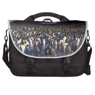 South America, South Georgia Island, King Laptop Computer Bag