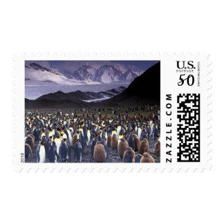 South America, South Georgia Island, King Postage