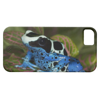 South America, Surinam. Close-up of Patricia iPhone 5 Cases