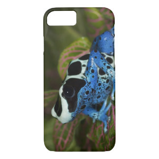South America, Surinam. Close-up of Patricia iPhone 7 Case