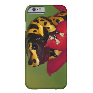 South America, Venezuela. Close-up of Barely There iPhone 6 Case