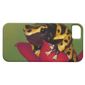 South America, Venezuela. Close-up of iPhone SE/5/5s Case