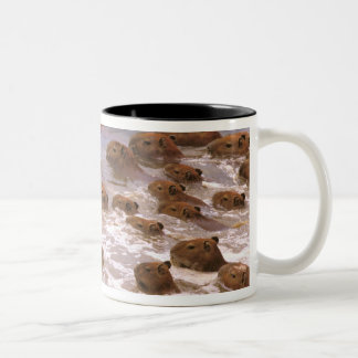 South America, Venezuela, Llano region. Two-Tone Coffee Mug