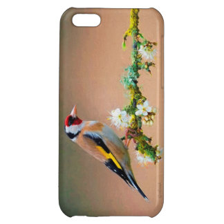 South American Finch Cover For iPhone 5C