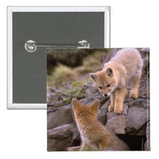 South American Gray Fox (Lycalopex griseus) pair 2 Inch Square Button