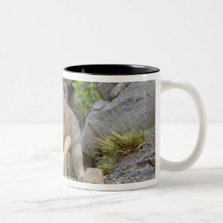 South American Gray Fox (Lycalopex griseus) pair 2 Two-Tone Coffee Mug