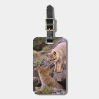 South American Gray Fox (Lycalopex griseus) pair Bag Tag