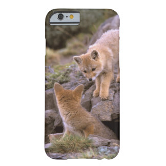South American Gray Fox (Lycalopex griseus) pair Barely There iPhone 6 Case