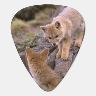 South American Gray Fox (Lycalopex griseus) pair Guitar Pick