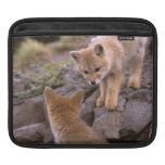 South American Gray Fox (Lycalopex griseus) pair iPad Sleeves