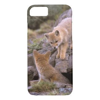 South American Gray Fox (Lycalopex griseus) pair iPhone 7 Case