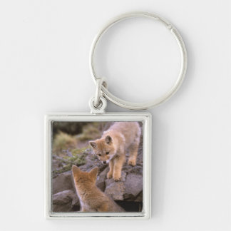 South American Gray Fox (Lycalopex griseus) pair Keychain