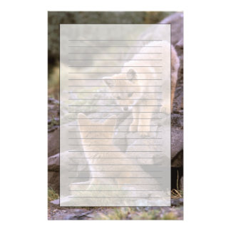 South American Gray Fox (Lycalopex griseus) pair Stationery
