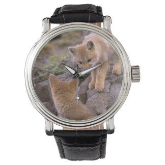 South American Gray Fox (Lycalopex griseus) pair Wrist Watches