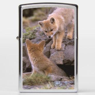 South American Gray Fox (Lycalopex griseus) pair Zippo Lighter