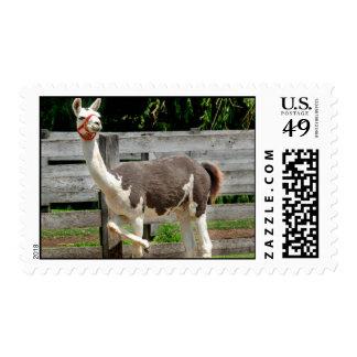 South American Llama Postage Stamp