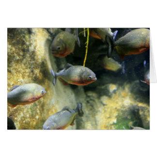 South American Piranha Fish Card