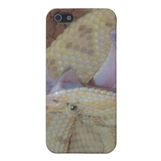 South American rattlesnake iPhone 4/4S Case
