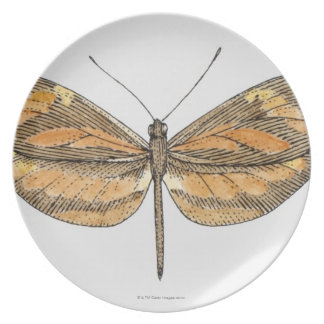 South American Tiger Dinner Plate