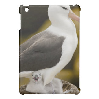 South Atlantic, Falkland Islands, New Island. 2 iPad Mini Case