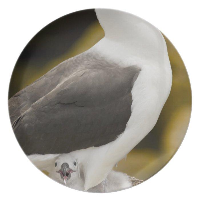 South Atlantic, Falkland Islands, New Island. 2 Plate