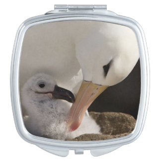 South Atlantic, Falkland Islands, New Island. Mirror For Makeup
