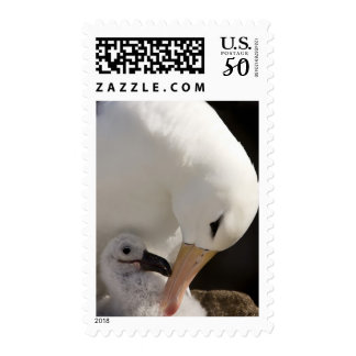 South Atlantic, Falkland Islands, New Island. Postage