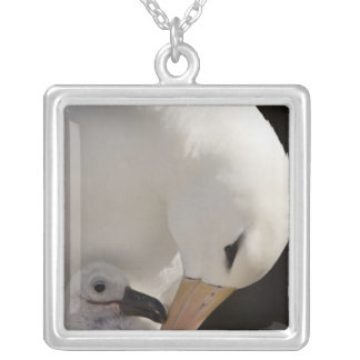 South Atlantic, Falkland Islands, New Island. Silver Plated Necklace