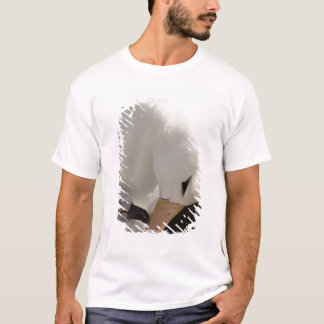 South Atlantic, Falkland Islands, New Island. T-Shirt