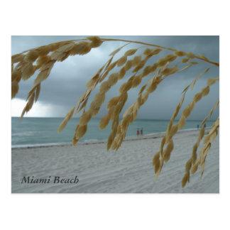 South Beach Miami Post Card