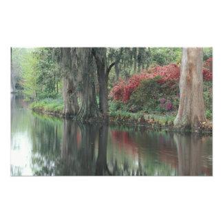 South Carolina, Charleston Photo Print