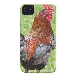 South Carolina Gamecocks Cell Phone Cases Covers iPhone 4 Case-Mate Cases